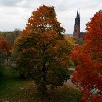 Sigtuna & Uppsala: Autumn in Sweden