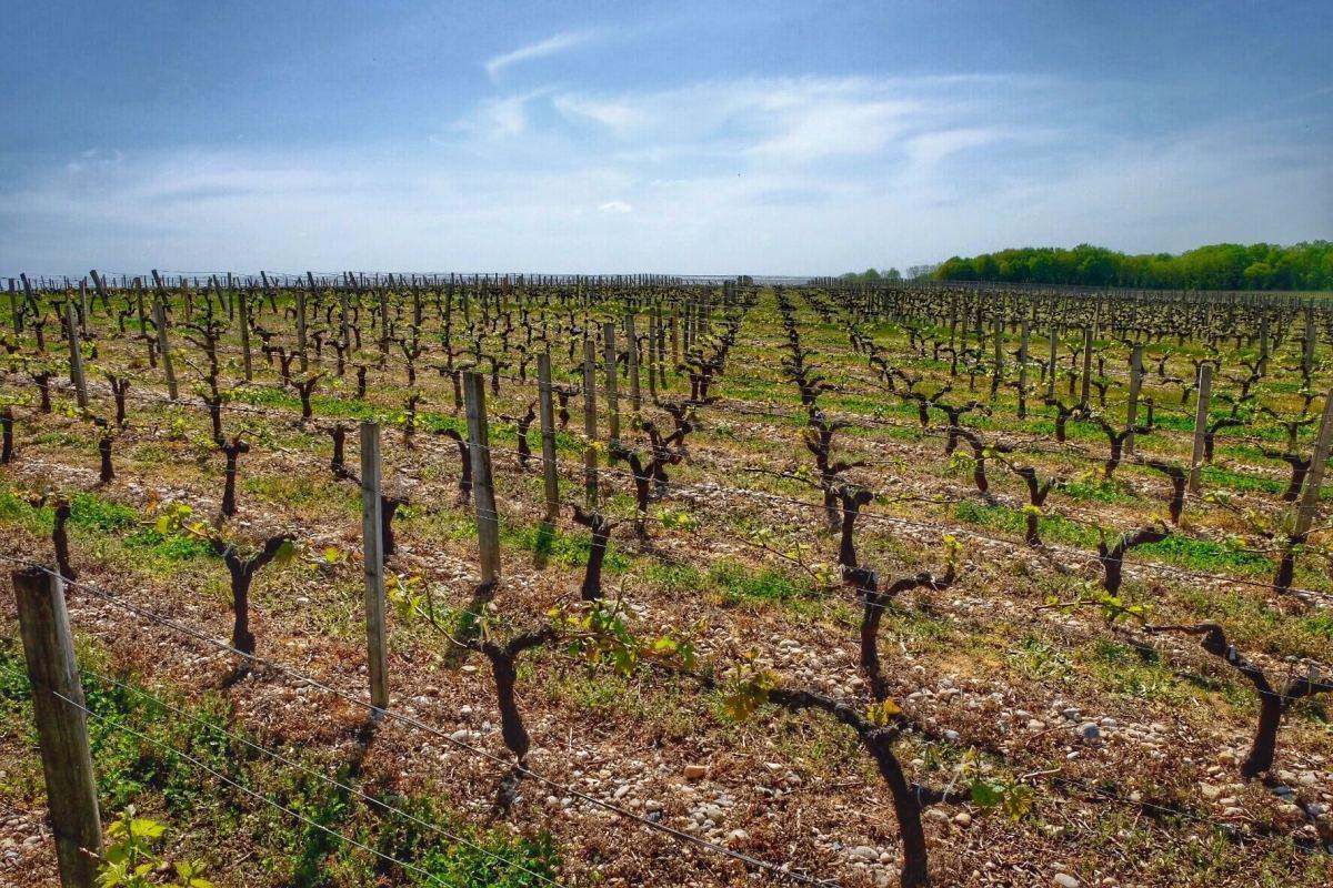 Bordeaux: Le Vin et le Sable